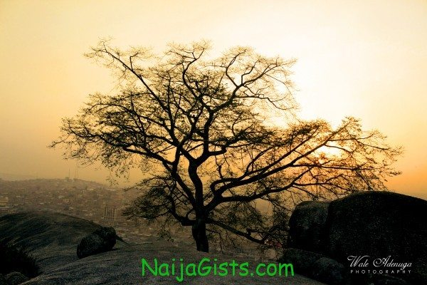 The Tree Of Life by Wale Adenuga