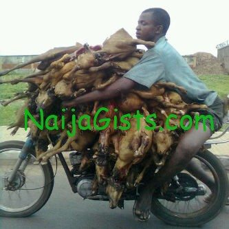 nigerian man carrying dead goat on Okada