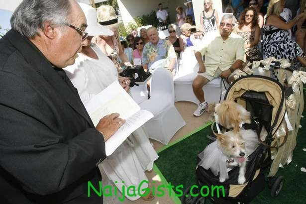 pet wedding ceremony