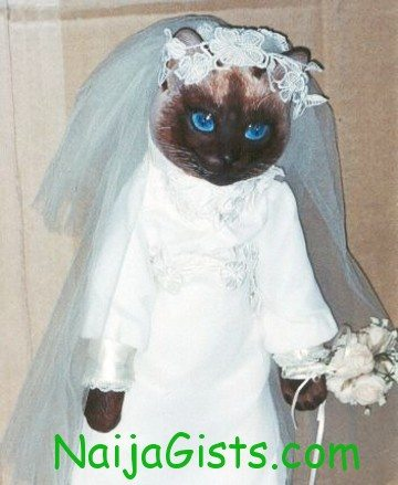 german man marries cat