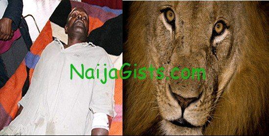 man survives lion attack
