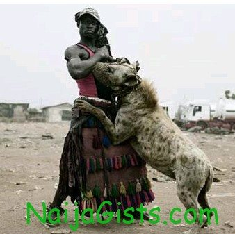 nigeria got talent hyena lover