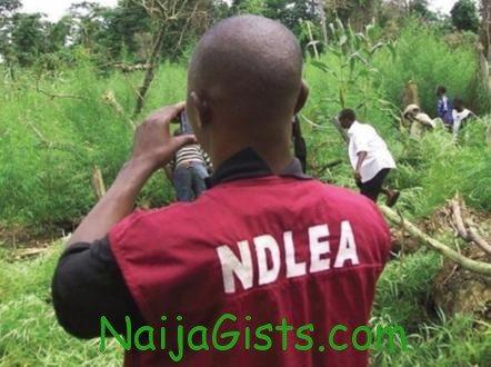 drug trafficking in nigeria