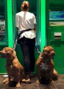 security dog atm south africa