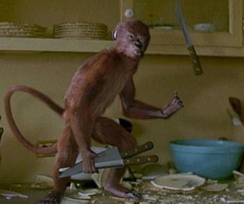 spiritual monkeys attack gbagada lagos