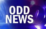 odd_news