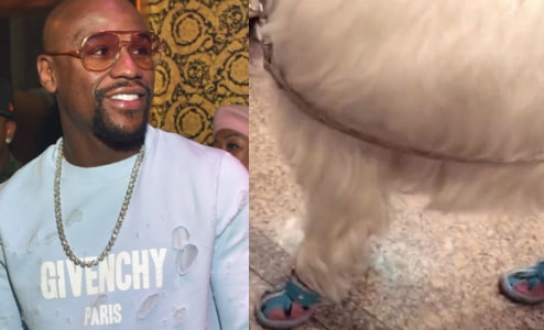 mayweather louboutin shoes dog