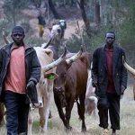 fulani herdsmen kill 200 plateau state