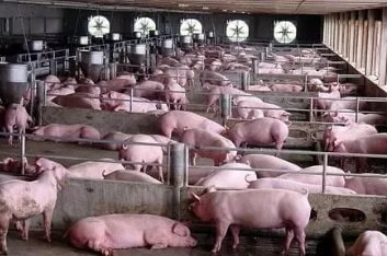 how to start a pig farming business in nigeria