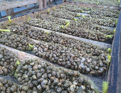 how to start snail farming business nigeria