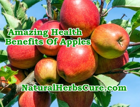 apples healing power health benefits