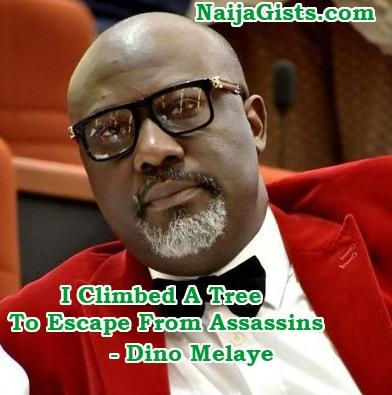 dino melaye climbed a tree escape assassins