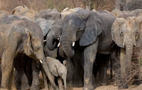 yankari game reserve elephants crush villagers death