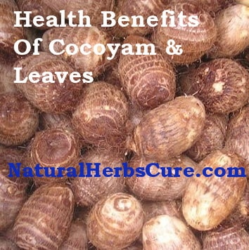 health benefits side effects cocoyam leaves