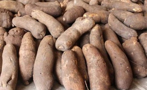 how to start yam supply farming business nigeria