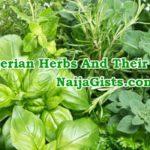 nigerian igbos yoruba herbs uses