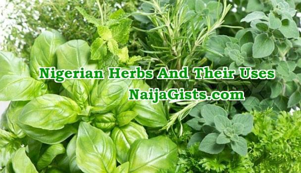 nigerian yoruba herbs uses english names