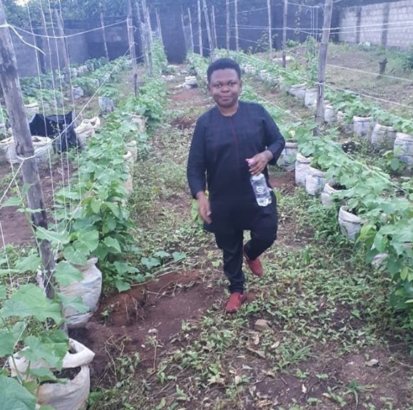 osita iheme vegetable farm enugu