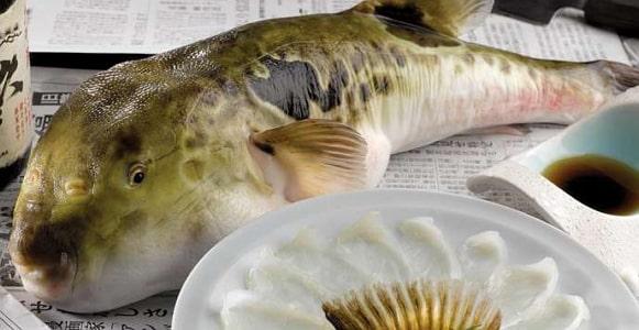 puffer fish nigeria poison
