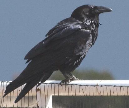 bird attack baby benue state