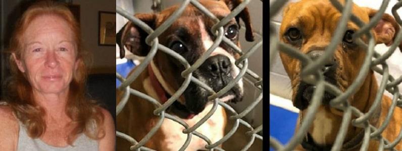 pit bull dogs kill owner sc