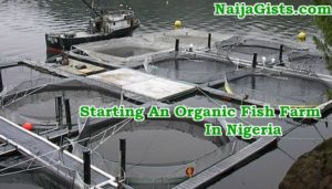 Guide To Starting Organic Tilapia & Catfish Farming Business In Nigeria