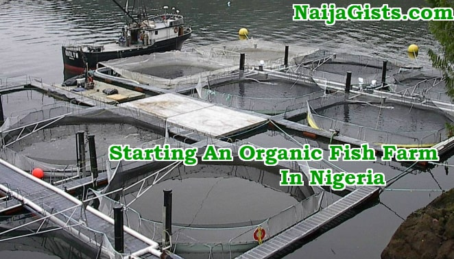 how to start organic fish farming business nigeria