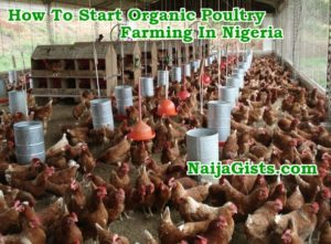 How To Start Organic Poultry Farming In Nigeria