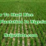 how to start rice farming production nigeria