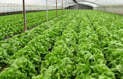 organic farming practices nigeria history challenges