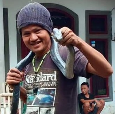 pet python snake kills owner indonesia