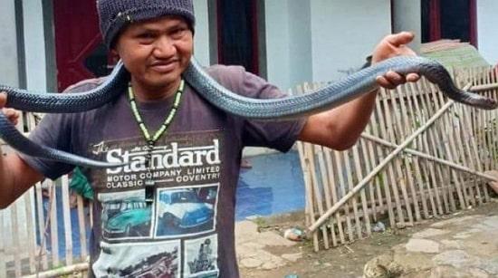 python strangles owner indonesia
