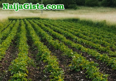 vegetable farming lucrative nigeria
