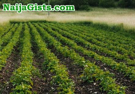vegetable farming lucrative nigeria