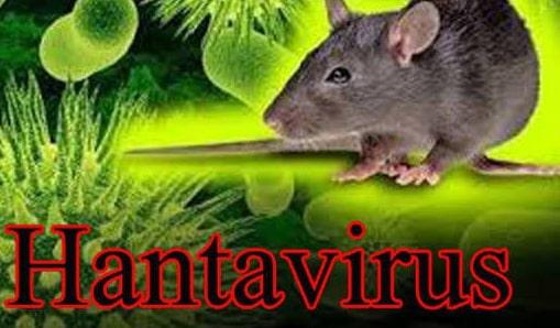 hantavirus symptoms