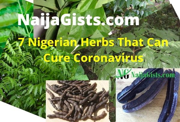 nigerian herbs cure coronavirus