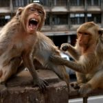 monkeys steal covid 19 test samples delhi india