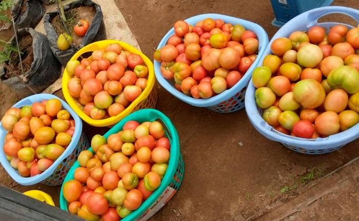 zero hunger fighter nigeria